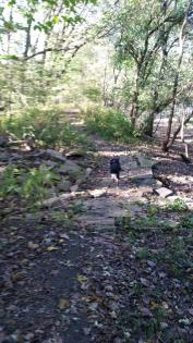 Dog crossing rocky path