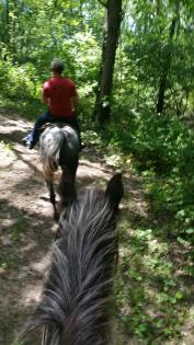 horse and trailrider in the woods viewed through second horses ears at Clinton Lake, Farmer City, Ilinois