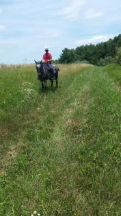 Horse and trailider in a meadow at Clinton Lake State Park