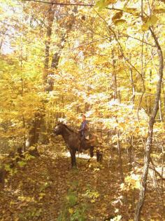 Horse and rider in autumn golden leafed forest at Middle Fork State Fish and WIldlife Area, Oakwood, Illinois