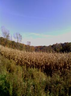 Autumn corn fields and forests at Middle Fork State Fish and WIldlife Area, Oakwood, Illinois
