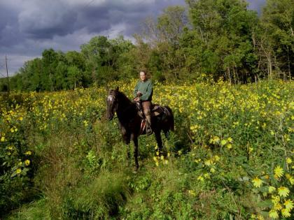 Horse and rider in fall prairie flowers at Middle Fork State Fish and Wildlife Area Oakwood, Illinois