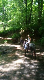 Horse and trailrider in shady creek at Sand Creek in Decatur, Illinois