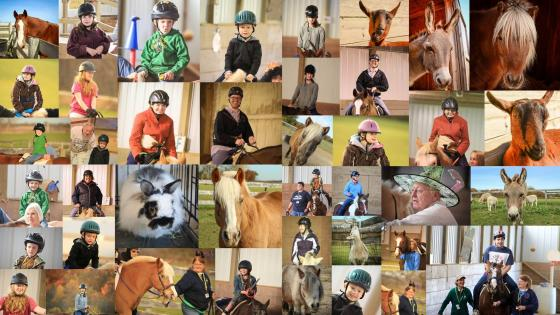 collage of therapy horses