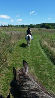 Looking through horse ears at horse and rider in a meadow at Sand Creek in Decatur, Illinois