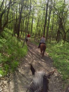 Horse and rider through horse ears of wooded trail at Sand Creek in Decatur, Illinois
