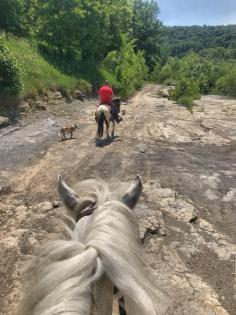 Horse and rider on top of bluff at East Trigg Trailhead, Jackson Falls in the Shawnee National Forest