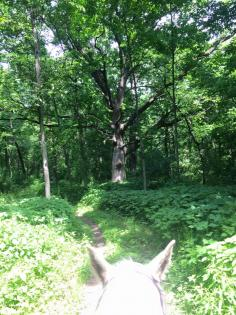 View through horse ears at the equestrian trail entering Rockwood forest in Morrison-Rockwood State Park