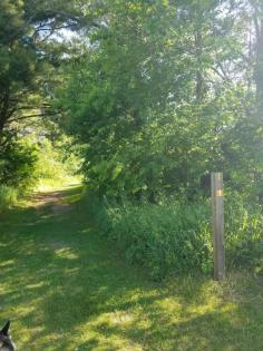 Trail markers for horse and hiking trails at Roland Olson Forest Preserve