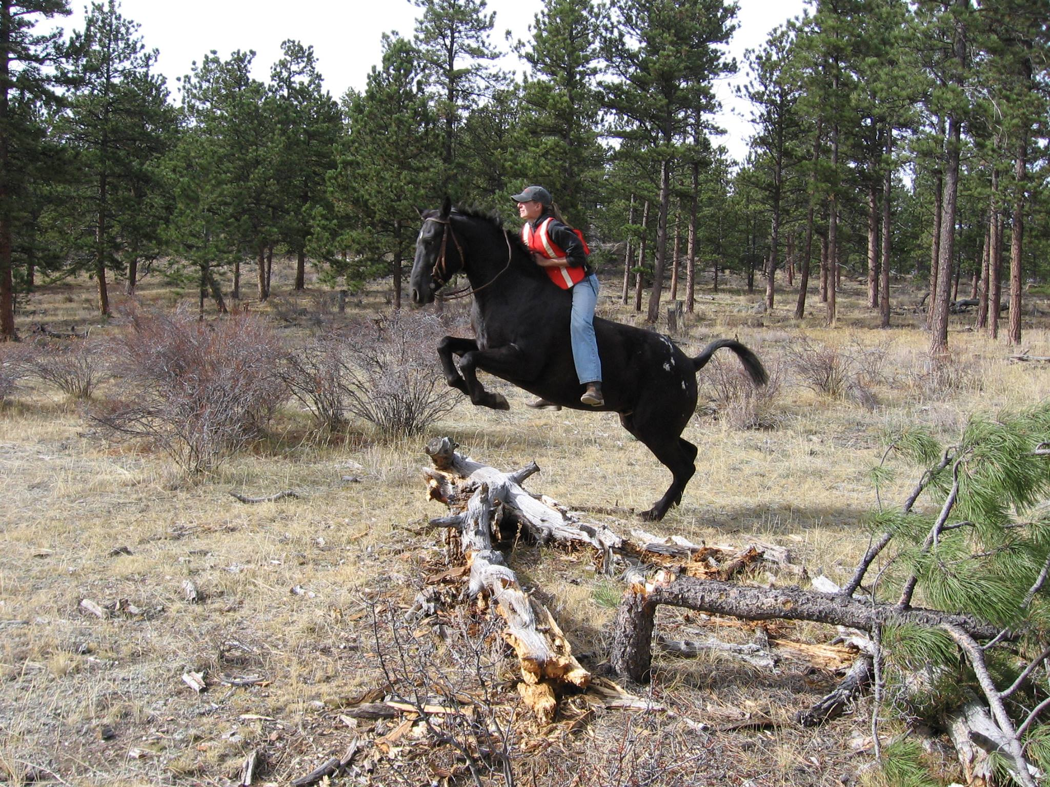 Blog author jumping horse over log