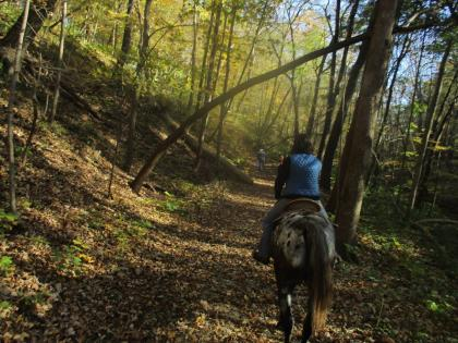 Horse and trailrider in the woods at Matthiessen State Park in Oglesby, Illinois.