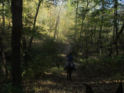 Horse and trailrider in the shaded woods at Matthiessen State Park in Oglesby, Illinois.