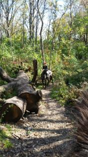 Horse and trailrider near a giant felled tree at Matthiessen State Park in Oglesby, Illinois.