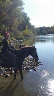Horse and trailrider walking in the river at Matthiessen State Park in Oglesby, Illinois.