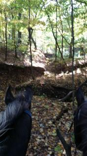 Two sets of horse ears looking at forest at Wolf Creek State Park