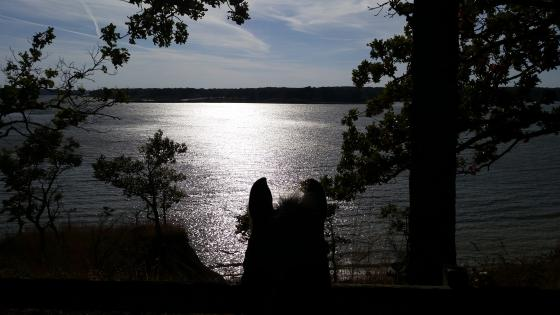 horse ears silhoutted looking over lake Shelbyville at Wolf Creek State Park