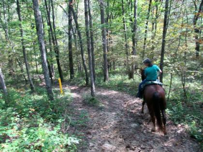 Horse trailriding through woods at Siloam Springs State Park in Clayton Illinois