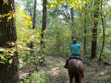 Horse and rider on a wooded trail at Siloam Springs State Park in Clayton Illinois.